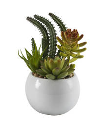 Buy Green Shaded Artificial Plant with Glossy Finish Pot pot online