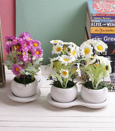 Buy Set of 2 Beautiful Pink & White 16 CM Artificial Floral Plants artificial-flower online
