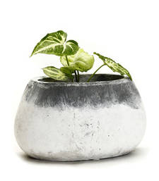 Buy Grey and White Stone Pot With a Frosted Finish Rustic Look pot online