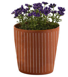 Buy Striped Pattern Brown 7.5 CM Planter Pot pot online